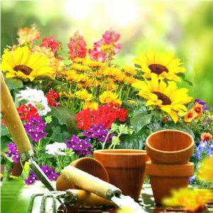 گلدان رنگی و ابزار باغبانی
