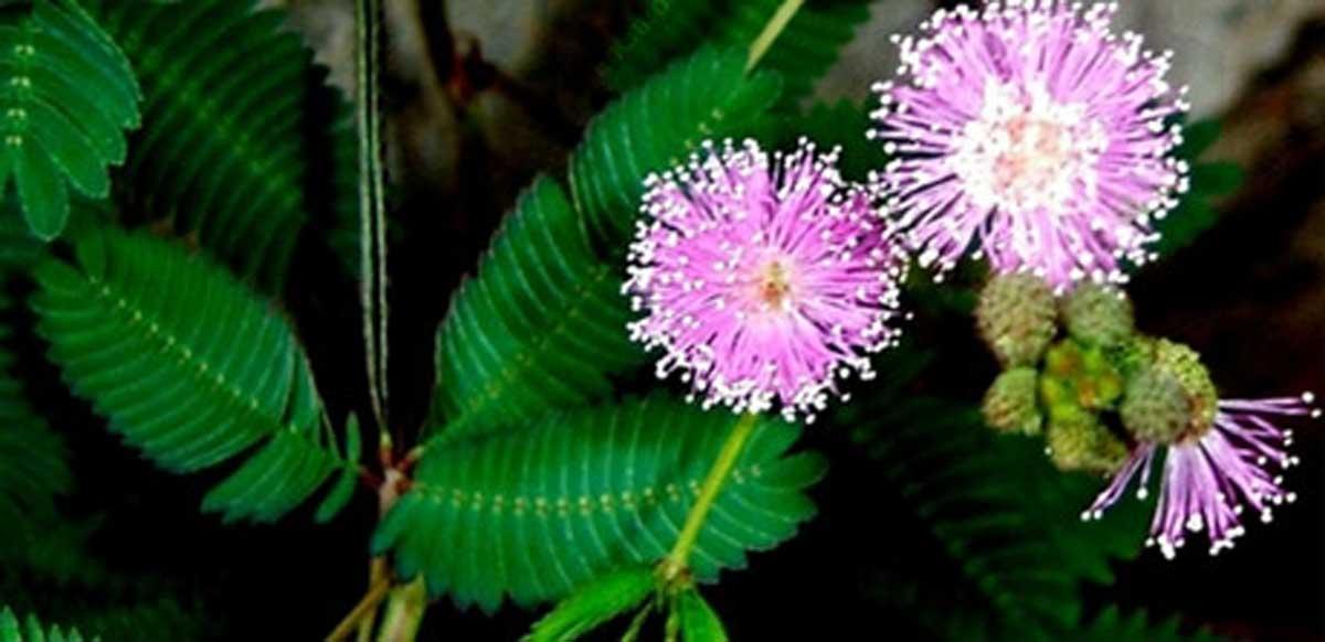 گل قهر