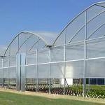 گلخانه تولید گل و گیاه