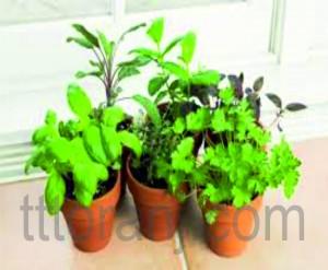سبزی کاری در منزل